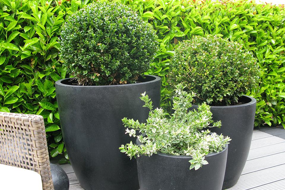 Black Ceramic Planters 4
